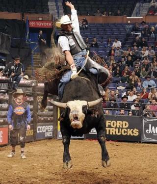 bulls in control