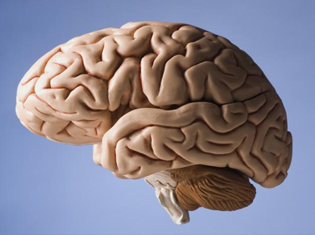Image for Brain Thaw