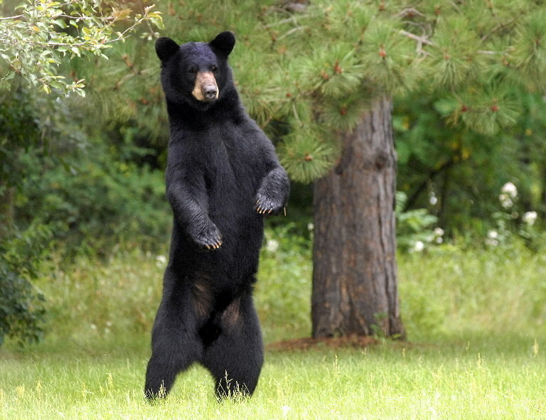 Walmart dancing with the bear